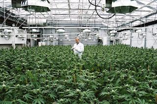Weed institute