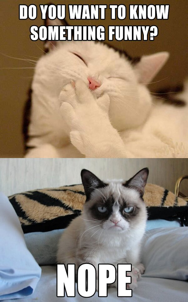 funny grumpy cat pictures - photo #2