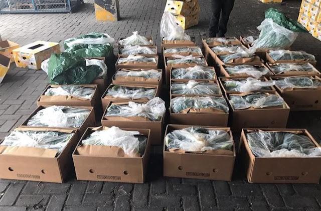 Cocaine seized in Durres belonged to El Clan del Golfo cartel, according to Mexican media