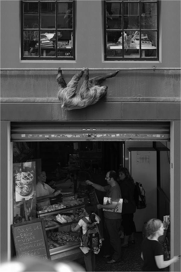 12-Three-toed-Sloth-Ceslovas-Cesnakevicius-The-Zoo-on-our-Streets-Black-and-White-Photography-www-designstack-co