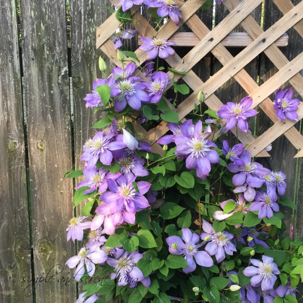 wooden fence summer flowers