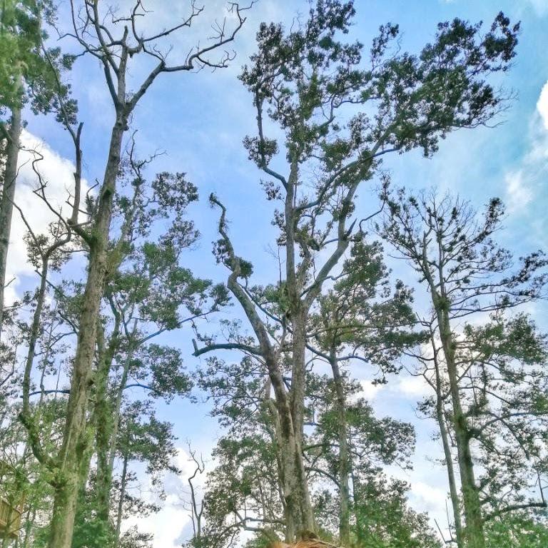 Citra Kebun Wisata Durian Sei Lekop Sagulung Batam