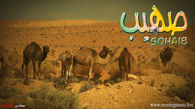 معنى اسم صهيب وصفات حامل هذا الآسم Sohayb,