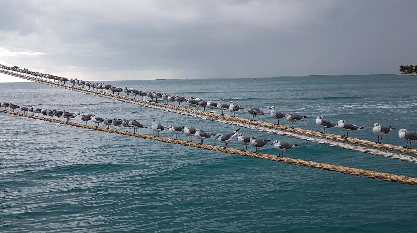 O que fazer em Key West,Flórida