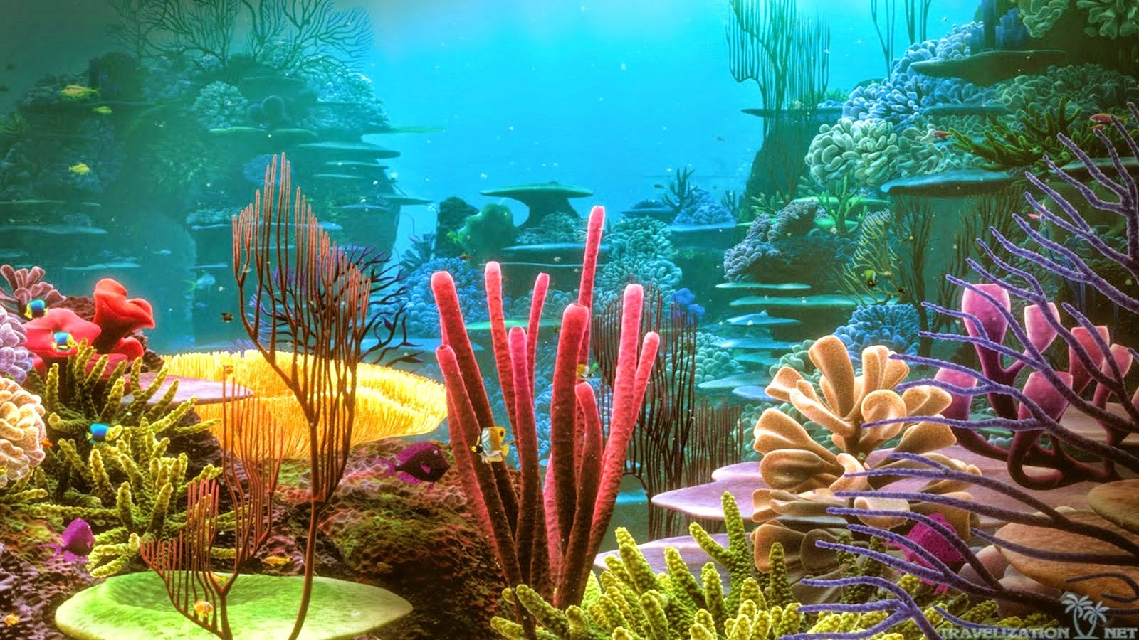 Coral Reef Fish - HD Wallpapers | Earth Blog