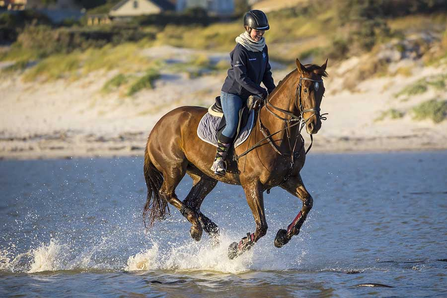 Equestrianism for Beginners