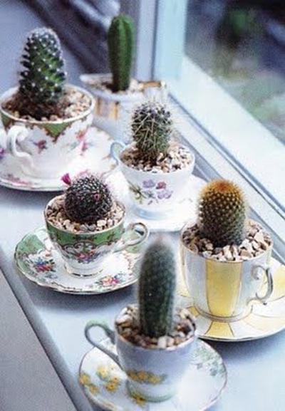 Kaktus dalam cangkir.