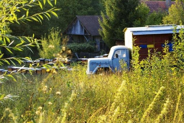 beekeeping farm in countryside of croatia
