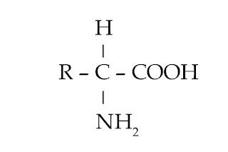rumus umum asam amino