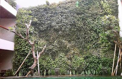 Tukang Taman Vertikal Surabaya | Vertical Garden 10