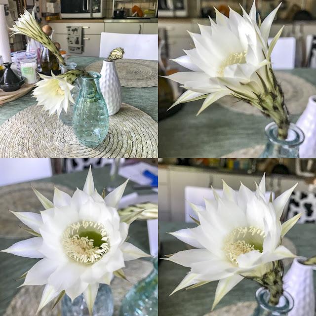 kaktusblommor