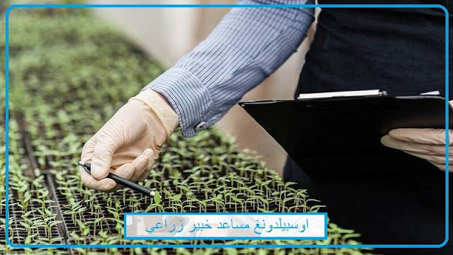 اوسبيلدونغ مساعد/مساعدة خبير زراعي  Landwirtschaftlich-technische/r Assistent/in