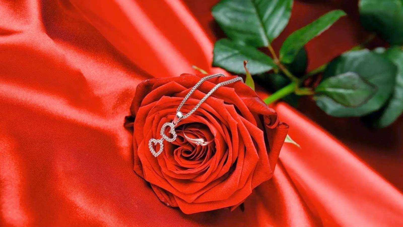 صورة وردة حلوة جميلة 3