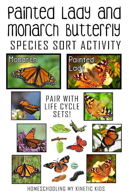 Work on visual discrimination by comparing these 12 butterfly pictures and sorting them between two species or first letter.