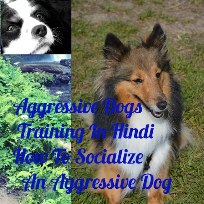 Aggressive Dogs Training In Hindi - How To Socialize An Aggressive Dog