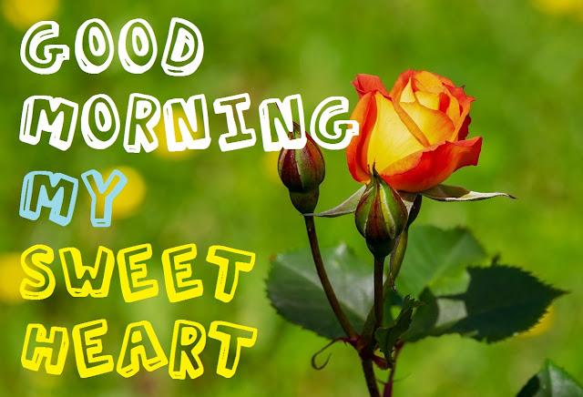 Good Morning My Sweet Heart yellow rose image
