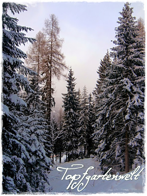 Gartenblog Topfgartenwelt Schlittenfahren: verschneiter Wald in Altenmarkt
