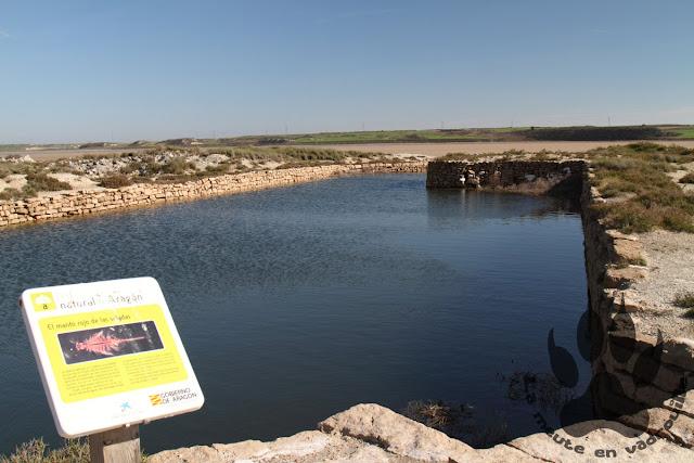 Espagne-Bujaraloz-lagune-playa-artemias