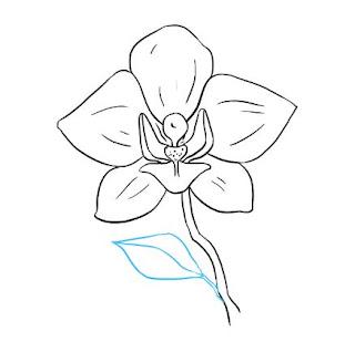 تعليم الرسم للاطفال المبتدئين رسم زهرة الأوركيد خطوة بخطوة