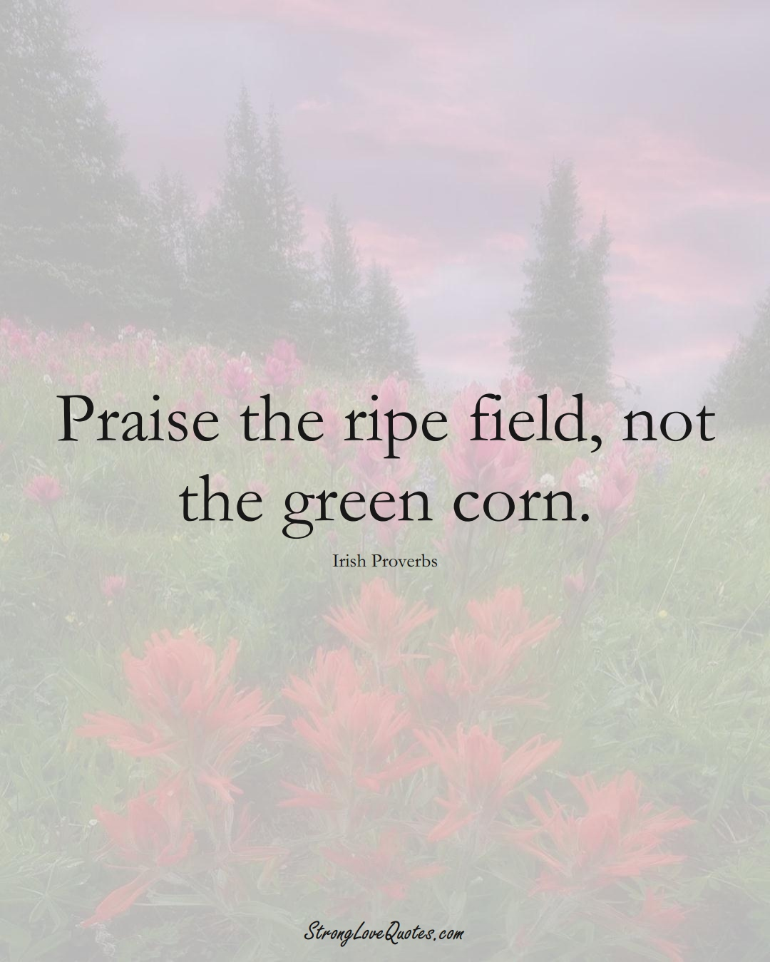 Praise the ripe field, not the green corn. (Irish Sayings);  #EuropeanSayings