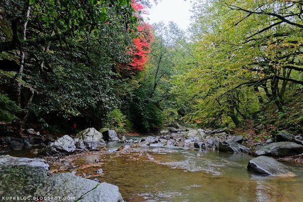 Ярко красное пятно - предвестник скорого листопада