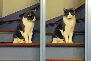 Spackle Puss (the cat) 17 (on staircase ears 2010)
