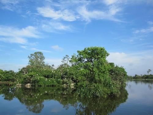 Đảo cò Chi Lăng