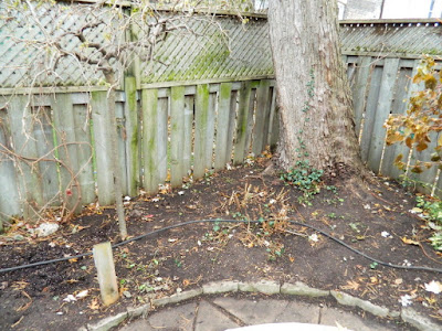 Toronto Greenwood-Coxwell Fall Garden Cleanup after by Paul Jung Gardening Services