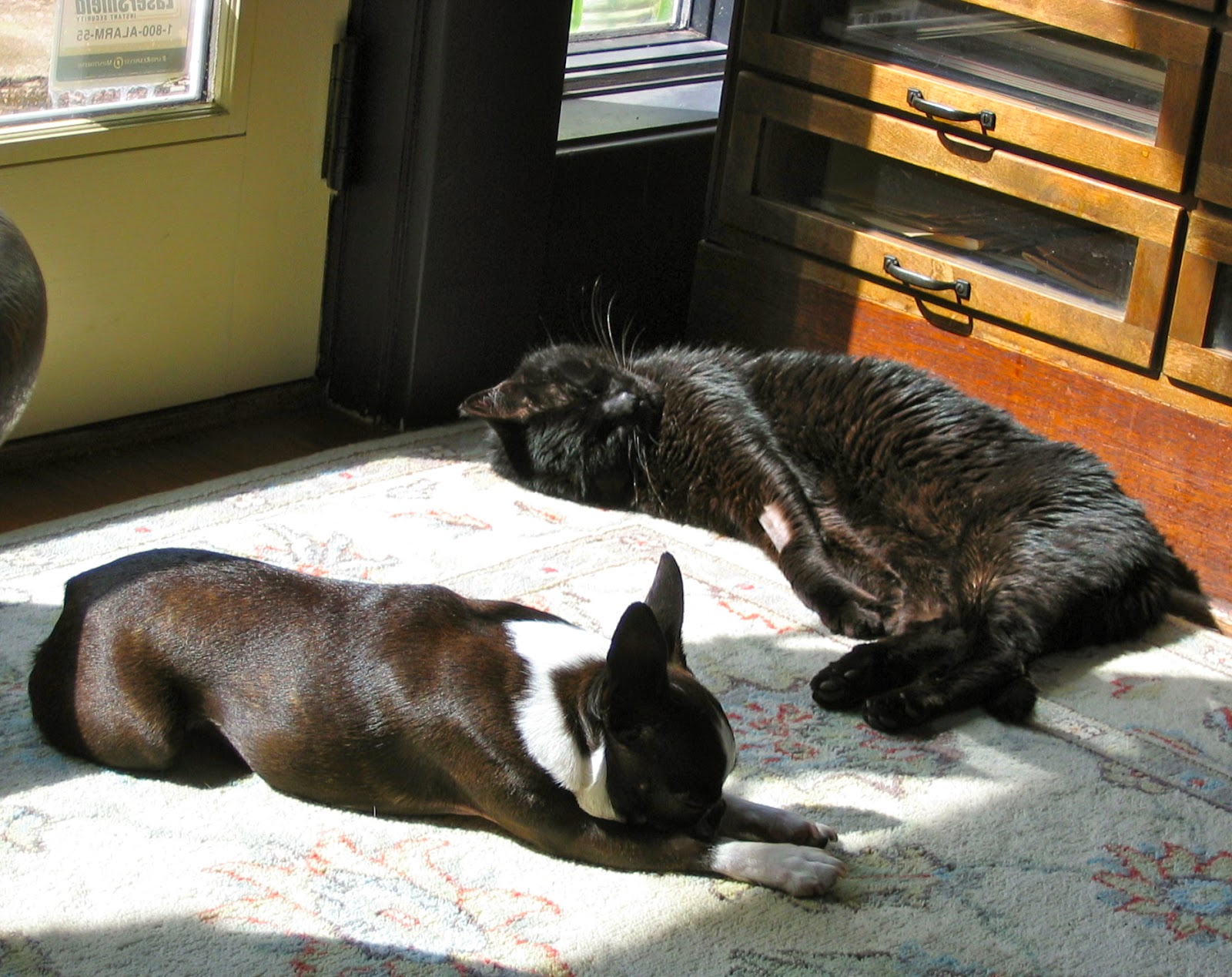 Sinead and Troy sharing a sunbeam