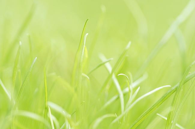 Das Gras wachsen hören