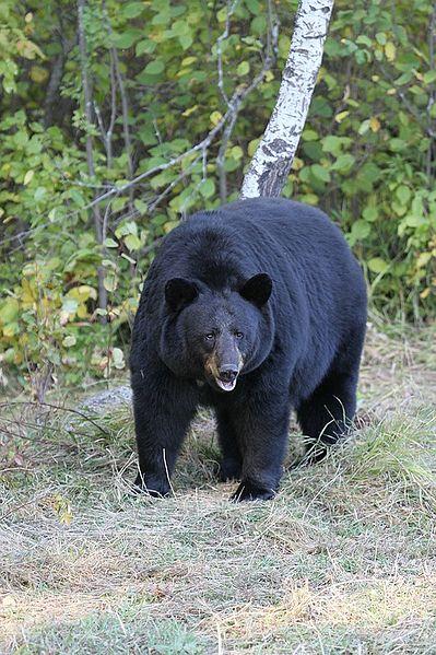 The Best Bear Defense Handgun — The LocaCarnivore
