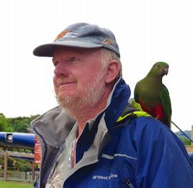 "O'Reilly's""wild""  birds, Lamington National Park, QLD Australia"