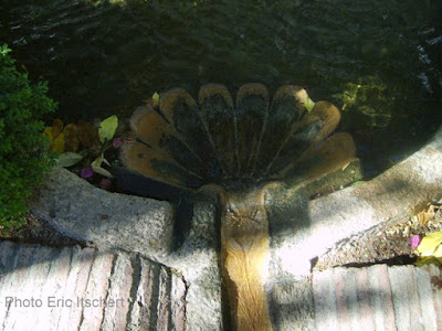 bassin,baignade,Icare