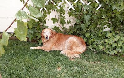 Apelsinblomshund vet var de svalaste platserna finns