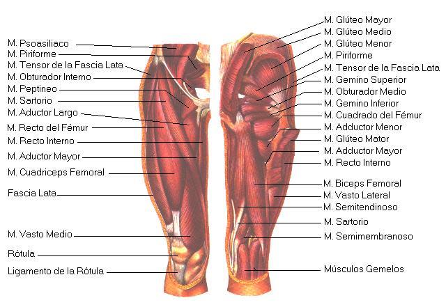 Cuerpo sano; recibo Osteopatía Profesional: Psoitis, (dolor abdominal)