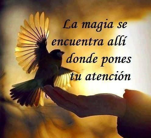 ===La magia se siente, se vive...=== 11742884_923234541056465_4630467309962768279_n