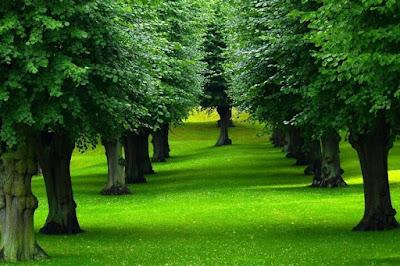 خلفيات أشجار جميلة 2021 صور اشجار طبيعية ملونة