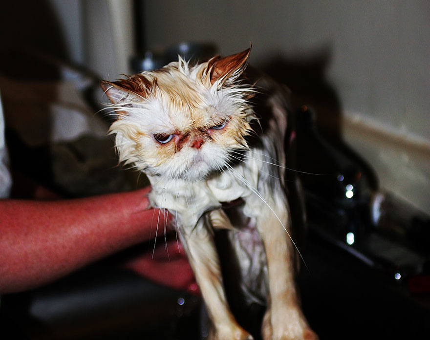 funny-wet-cats-14