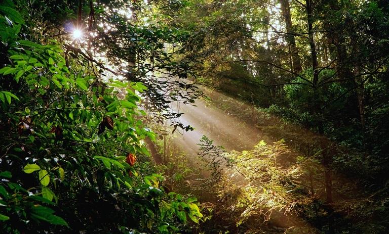 Lebatnya Leuser, melimpahnya oksigen bagi manusia | sukmadede.com