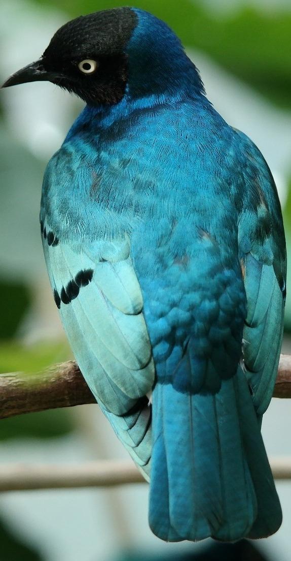A pretty bird.