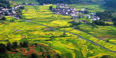 Gambar Pemandangan Alam di Desa China Keindahan Sawah Sungai