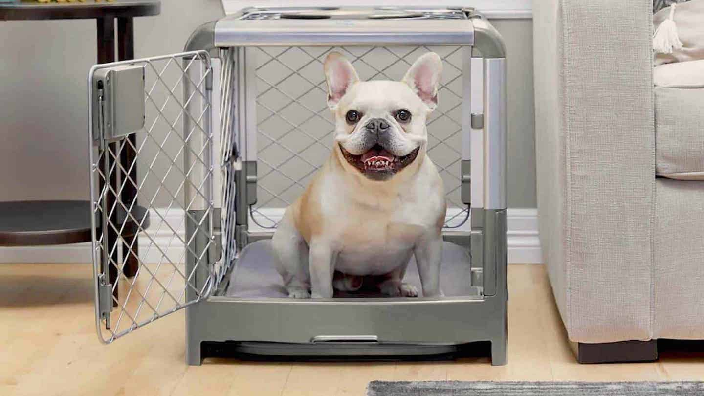 Crate Training a Puppy: How to Crate Train a Puppy in 9 Easy Steps