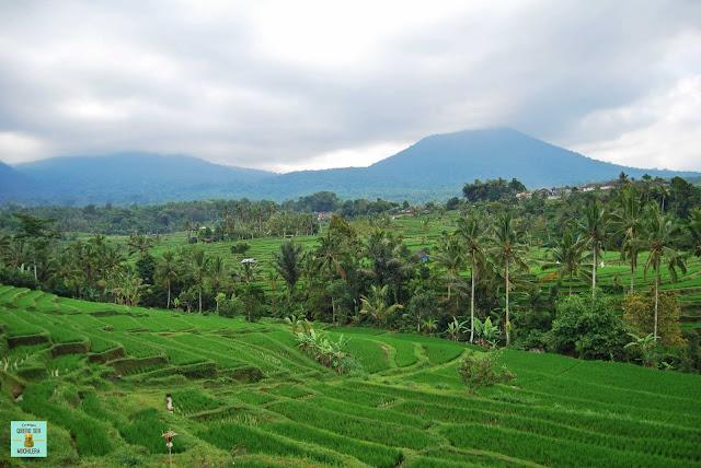Arrozales de Jatiluwih, Bali