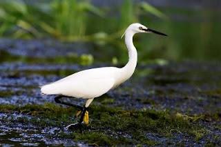 Delta Banatului - Rezervatia Ornitologica Satchinez