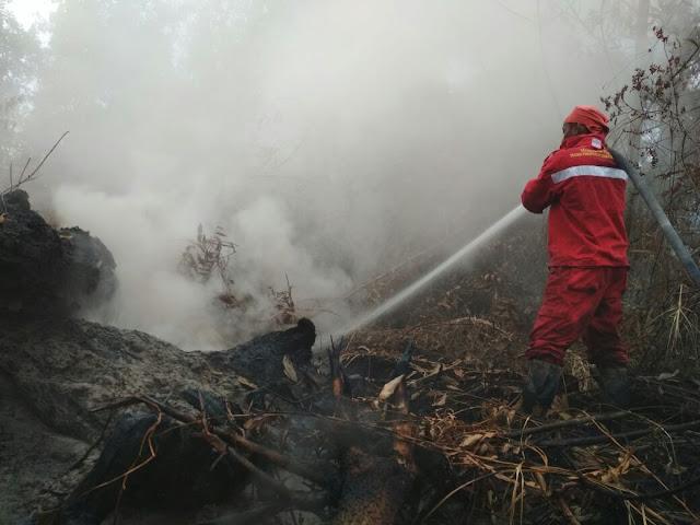 KLHK mengajak masyarakat terlibat dalam pencegahan kebakaran Hutan
