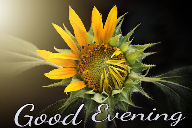 Good evening image with flowers free download