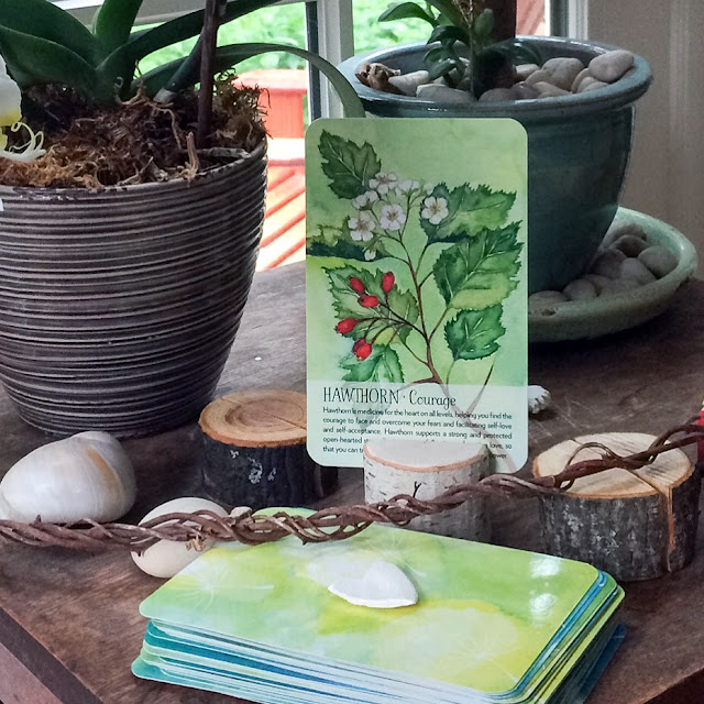 Plant Spirit Oracle Deck, Artist, Gardener, Lisa Estabrook, Artist Interview, My Giant Strawberry