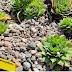 """Καρδία: Πρόσκληση για """"υιοθεσία"""" σπάνιων φυτών τα οποία διατίθενται δωρεάν"""