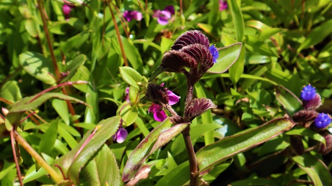 Kaas Valley of flowers