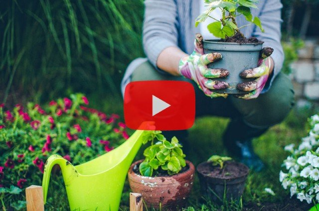 Membuat Channel YouTube pertanian